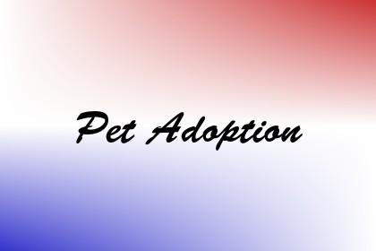 Pet Adoption Image