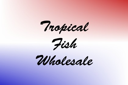 Tropical Fish Wholesale Image