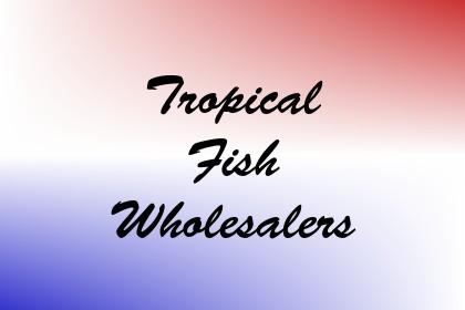 Tropical Fish Wholesalers Image