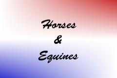 Horses & Equines